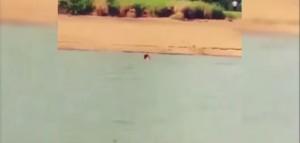 perde scommessa e si butta nel fiume infestato dai coccodrilli
