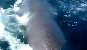 balena prova speronare barca di pescatori