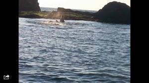 Debora, un tuffo, rischia la vita e salva un cucciolo di balena