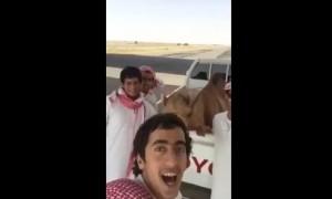 cammello imita i ragazzi che lo circondano e ride a squarciagola