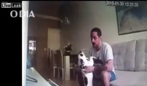 cane-brasile-video