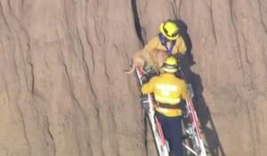 California, vigili del fuoco salvano cane incastrato nella roccia
