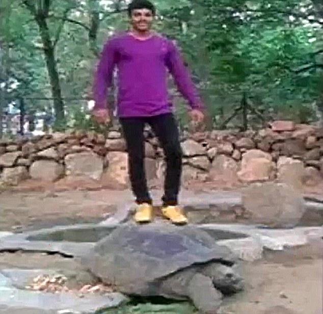 India, sale su tartaruga di 120 anni per foto su Facebook e viene arrestato