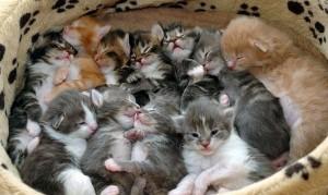 Migliaia di gatti sepolti vivi in Vietnam. Contrabbando dalla Cina per ristoranti