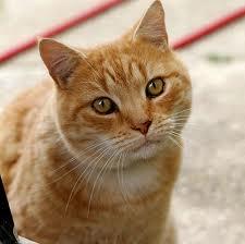 Giornata del gatto: il 17 febbraio è la festa dei felini, eventi in tutta Italia