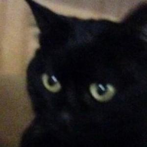 Bruno Misan dovrà pagare 15mila euro: uccise gatto della vicina