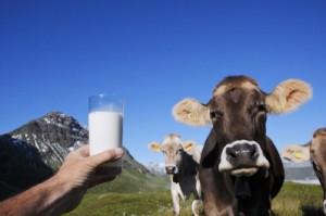 Quote latte, il diritto al nero. Era l'84, metà delle vacche nascoste al fisco