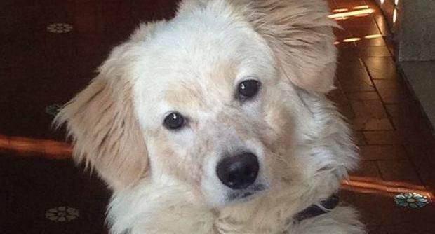 Lucky, cucciolo di cane scaricato dai padroni cerca casa FOTO