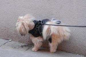 Se il cane fa pipì su muro o auto, un po' d'acqua vi salverà dalla condanna