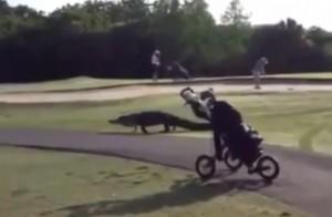 VIDEO YouTube Alligatore di 4 metri sul campo da golf: panico in Florida