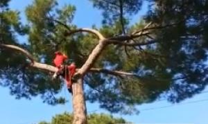 Gatto su un albero miagola per 4 giorni. Un tree climbing lo salva