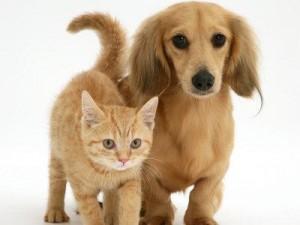 Croccantini vegetariani per cani e gatti? Per Federfauna è maltrattamento