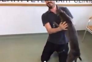 ritrova padrone dopo 6 mesi, la gioia del cane è incontenibile