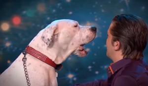 Xena, il cane che canta Whitney Houston