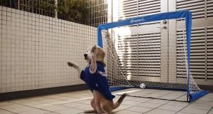 Purin Kumagai, il cane portiere che prende tutti i palloni