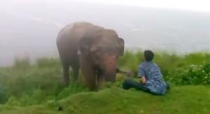 VIDEO YouTube: ubriaco provoca elefante, che lo abbatte e lo calpesta