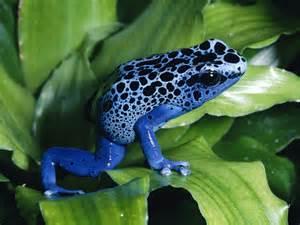 Ambiente Nel Mondo 15 Specie Di Animali Rischiano L