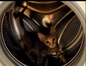 Gatto si crede criceto e corre nel cestello della lavatrice