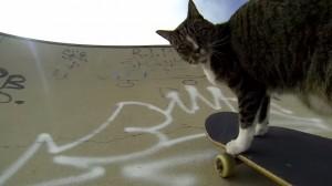 VIDEO YouTube - Il gatto che fa skate