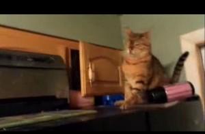 Il gatto bullo che sceglie come vittima un altro gatto