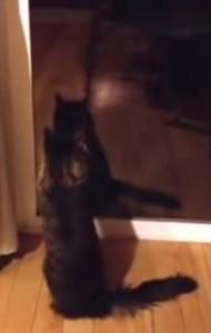 VIDEO YouTube Gattino dà la caccia alla sua ombra sul vetro
