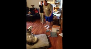 Husky ruba patate al forno: padrone lo sgrida, filmato è virale