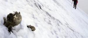 Messico, trovate 2 mummie abbracciate tra ghiacci Pico de Orizaba