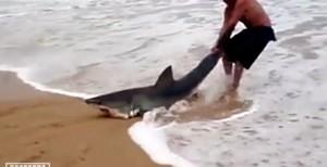 VIDEO YouTube: afferra pescecane spiaggiato e lo rigetta in mare