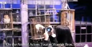 """Peta contro Warner Bros: sfruttano animali per tour """"Harry Potter"""