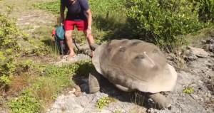 Tartaruga interrotta mentre fa sesso: l'inseguimento più lento di sempre