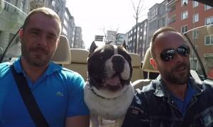 Junior, il cane che parla tutte le lingue del mondo