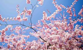 Meteo, arriva la primavera: da mercoledì 8 sole e temperature su per 10 giorni