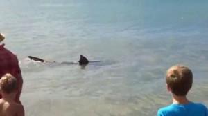VIDEO YouTube - Squalo vicino la riva, paura in Nuova Zelanda