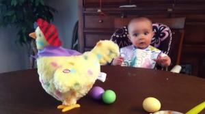 Finta gallina cova uova colorate: bimbo ride e strilla divertito