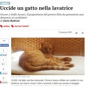 Olbia: butta il gatto in lavatrice e lo uccide avviando il lavaggio completo