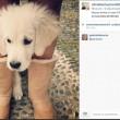 Silvio Berlusconi sbarca su Instagram con Dudù e Francesca Pascale FOTO7