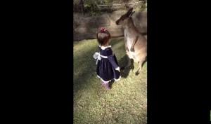 VIDEO YouTube: Australia, bimba di due anni accarezza baby canguro