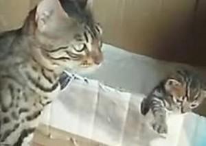 Mamma gatto insegna a camminare al cucciolo