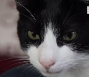 Gatto Merlin entra nel Guinness: sue fusa le più rumorose del mondo