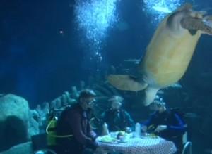 Sub cenano sott'acqua con la tartaruga gigante