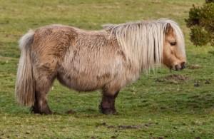 Australia, contadino sorpreso a fare sesso col pony: condannato a 18 mesi