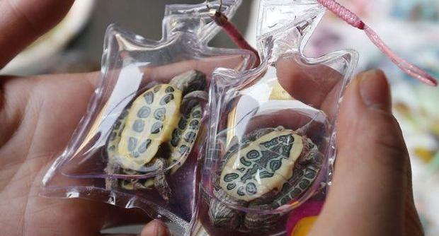 Animali vivi come portachiavi: tartarughe o pesciolini dalla Cina FOTO