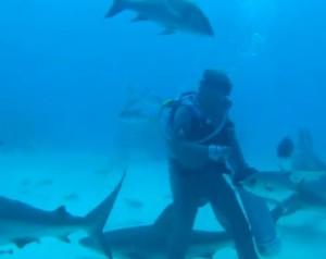 subacqueo ipnotizza lo squalo toccandolo