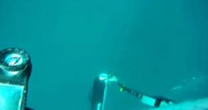 sta facendo pesca subacquea, si avvicina uno squalo bianco