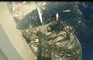 Cinque Terre, squalo azzurro attacca barca e ruba sacco di acciughe