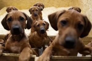 Lerma, comune alla bancarotta per... i cani