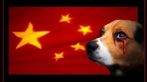 Firma No mangia cani. E se India firma No mangia vacche? Farsi i ca...ni propri