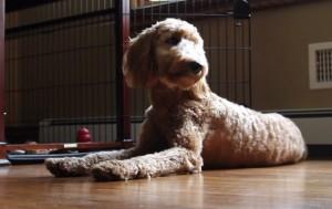 VIDEO YouTube - Cani al funerale: la pet therapy per superare i lutti