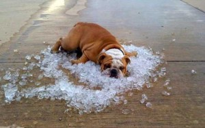 Meteo, Flegetonte porta la canicola: saranno 10 giorni di caldo afoso e torrido