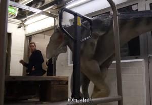 VIDEO YouTube - Chris Pratt, star di Jurassic World, spaventato dai dinosuari